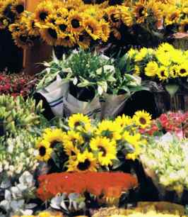 Amsterdam Flower Stall In Winter