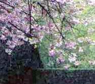 Spring Flowers in Keukenhof