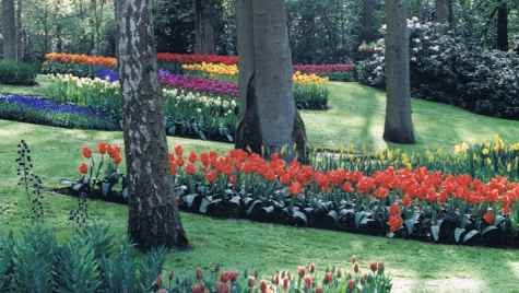 Springtime In The Netherlands Keukenhof Gardens
