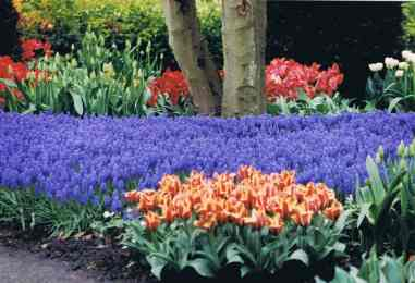 The Vibrant Colors of Keukenhof