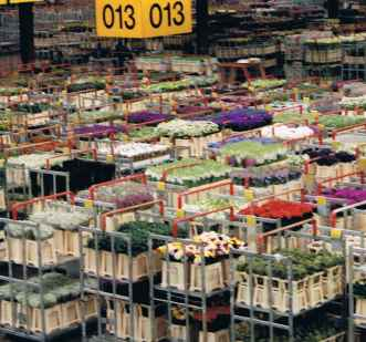 Early Morning at the Aalsmeer Flower Auction