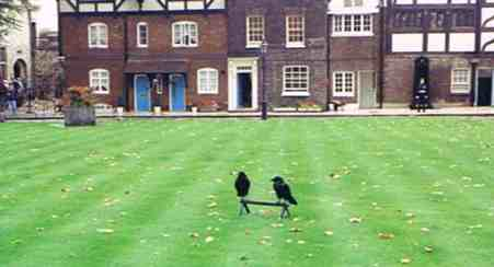 Crows Now Live Where Anne Boleyn Died