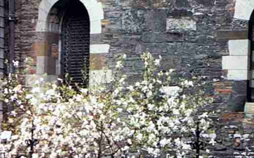 Medieval Architecture With Springtime Flowers
