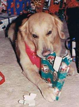 Before Traveling - Enjoying His Presents