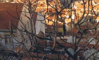 Cascading Lisbon Rooftops