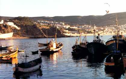 Portuguese Fishing Fleet