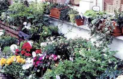 Flower Market In Bruges