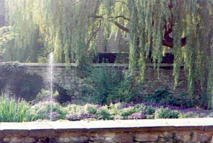 English Garden With Weeping Willow